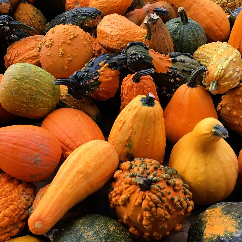 5 Delicious Autumn Fruits and Veggies and How to Prepare!